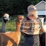 Châle / foulard - 100% alpaga naturel - feutré - réversible