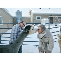 VIP package : For the love of alpacas