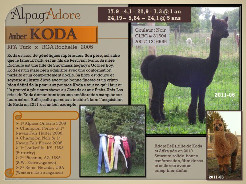 Amber Koda - alpaga male chez AlpagAdore