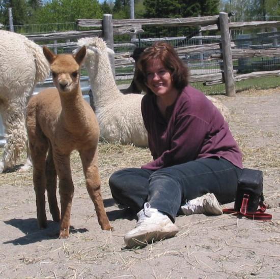 Tobias-male-alpaca-owned-by-AlpacAdore